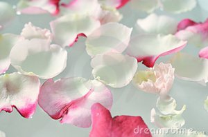 floating-rose-petals-10486663