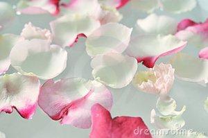 floating-rose-petals-10486663