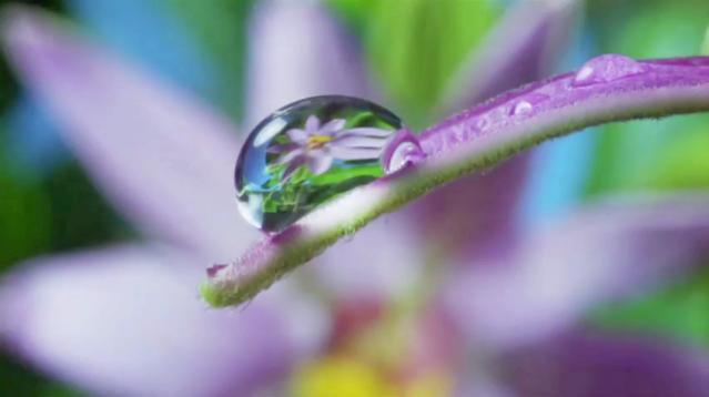 schwartzberg_nature-beauty-gratitude