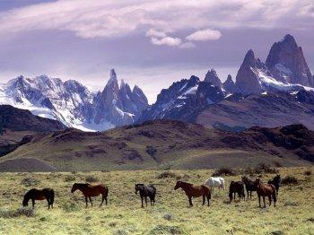 chilean-horses