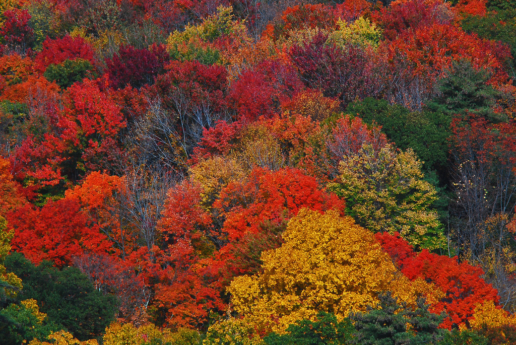 Best Time To Travel To Maine For Fall Colors