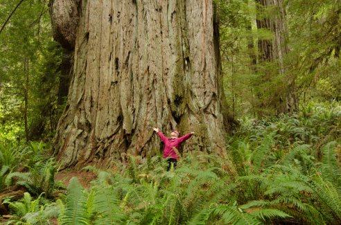 Coastal Redwoods, California